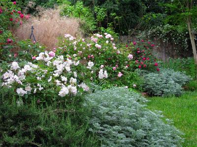 agave-%26-rose-border.jpg