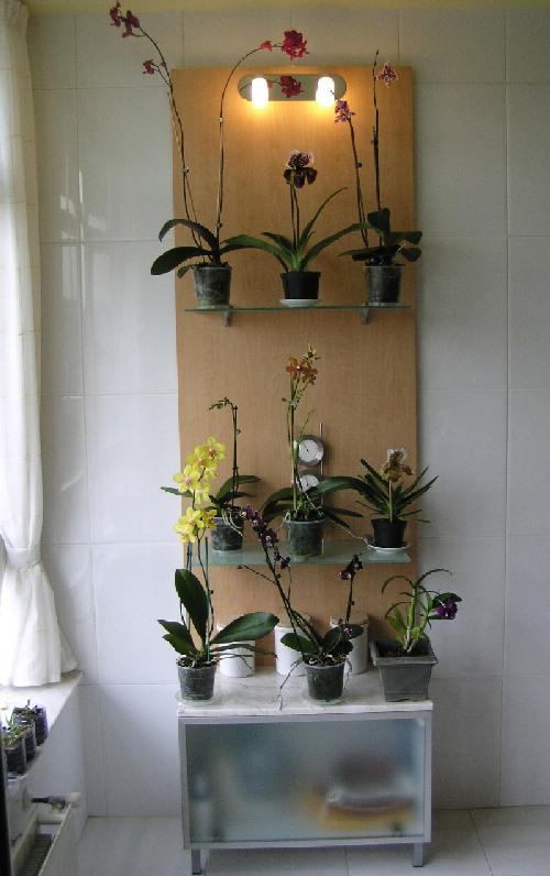 Dise o de interiores con plantas de interior p gina 2 for Estanteria plantas interior
