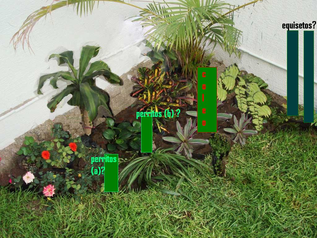 Ayuda para dise ar esquina de un jard n peque o - Como disenar mi jardin ...