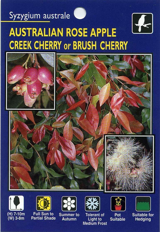 Australian-Rose-Apple-Creek-Cherry-Brush-Cherry-Syzygium-Australe.jpg