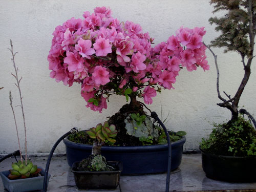 Plantas a pleno sol cu les me recomendais p gina 2 for Plantas para pleno sol
