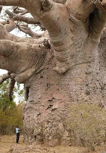 baobaba.jpg