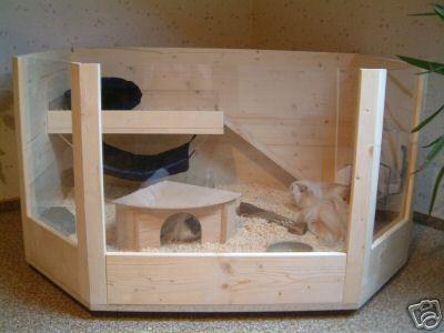 Cobayas informaci n y consejos - Donde se puede poner una casa de madera ...