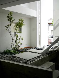 Rbol en maceta para patio interior acristalado cu l for Arbol interior