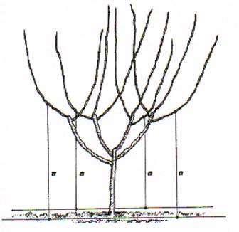 bfi1334402130w.jpg