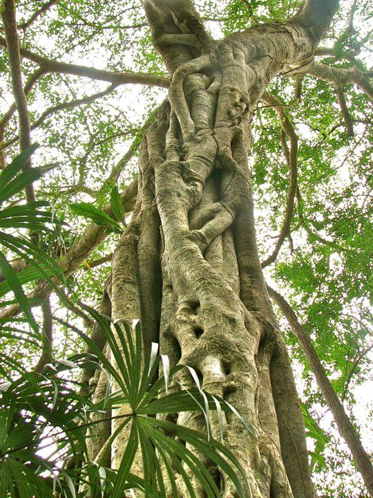BG+gnarled+tree1.jpg
