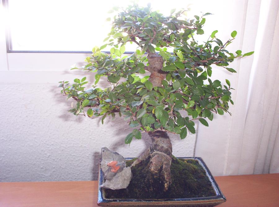 bonsai1%7E4.jpg