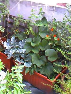 brocoli zapallo tomate.jpg