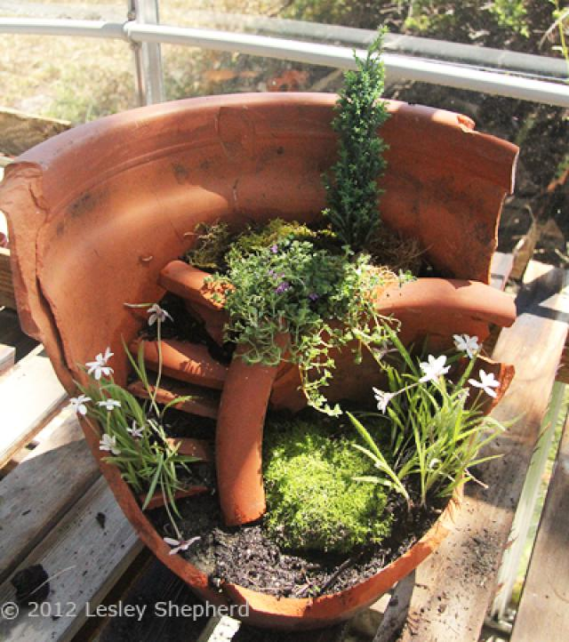 broken-flowerpot-planted.jpg