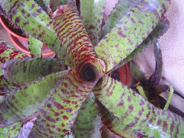 Bromelia13-12-20122_zpsb22e90c0.jpg