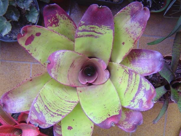 bromelias18-12-2012003_zps3b32d234.jpg