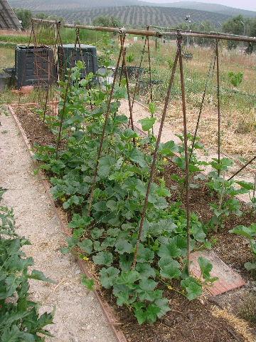 Entutorado qu tipos de tutores existen para hortalizas - Tutores para tomates ...