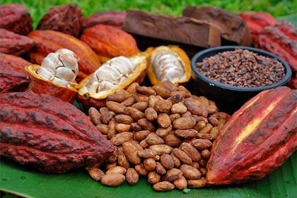 Cacao_londres.jpg