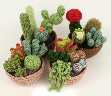 cacti_succulents.jpg