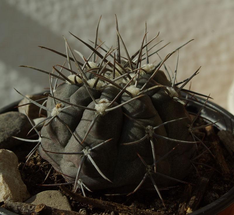 cactus-1.jpg
