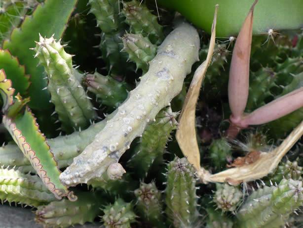 cactus2.jpg