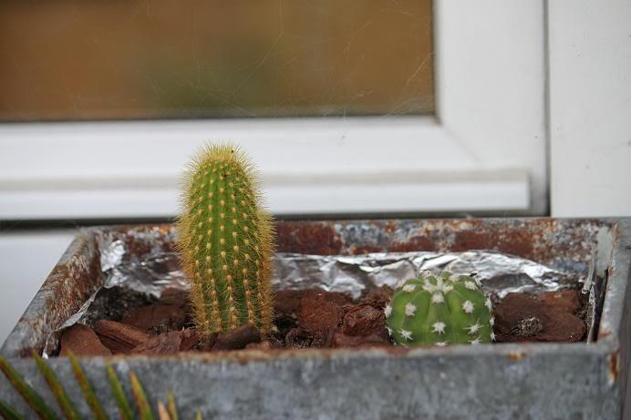 cactus3-1.jpg