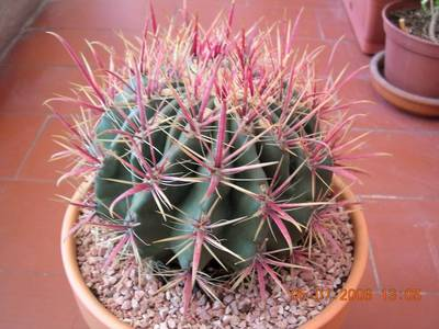 cactus_5_6_0051.jpg