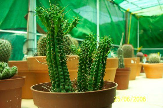 cactus_oscar_023.jpg