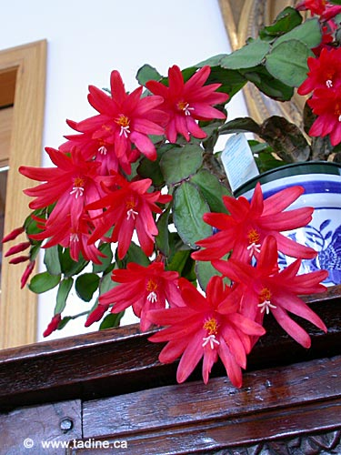 cactus_paques003.jpg