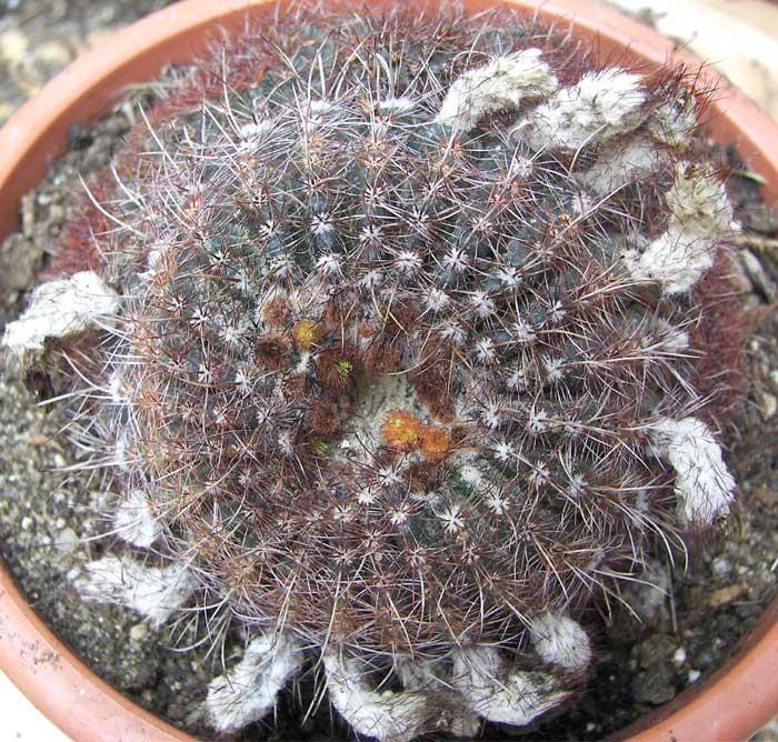 cactusident61.jpg