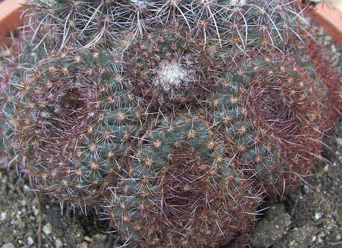 cactusident7.jpg