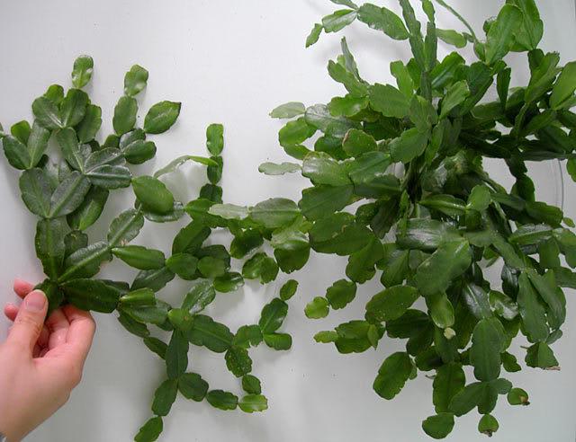 cactusnavi.jpg