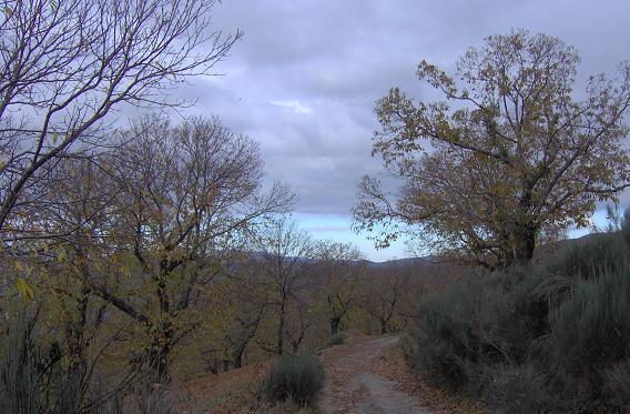 Camino_berciano.JPG