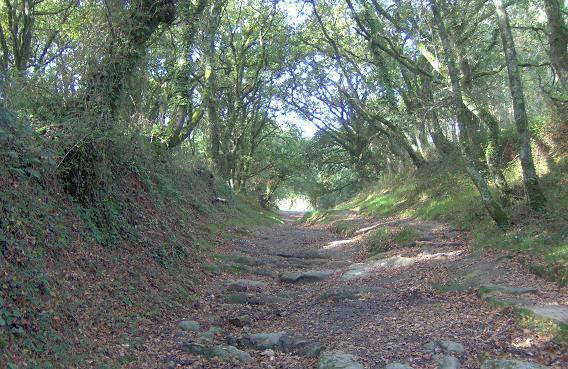 Camino_Galicia.JPG
