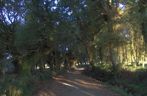 Camino_gallego.JPG