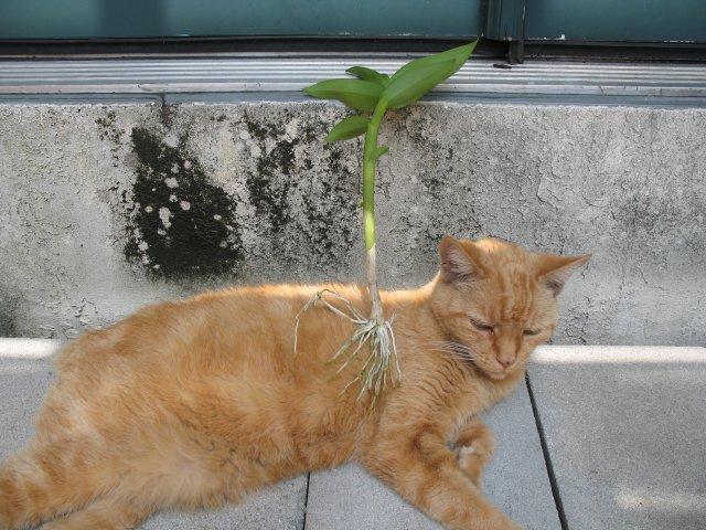 CatMount.jpg