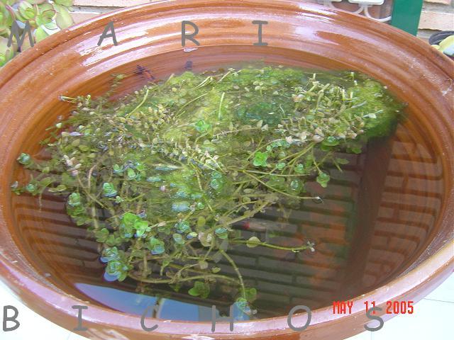 Estanque de mari bichos for Estanques pequenos para tortugas