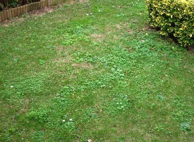 Desastre de c sped fotos for Como quitar la mala hierba del jardin