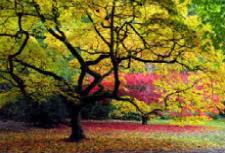 colorful-1-1.jpg