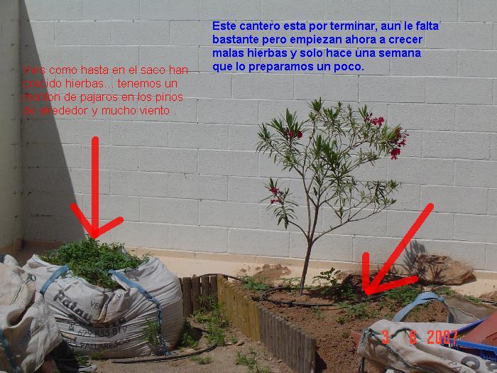 Como_crece_la_mala_hierba_hasta_en_los_sacos.jpg