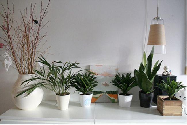 cuidado-plantas-interior.jpg