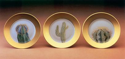 daum-cactus-dpa.jpg