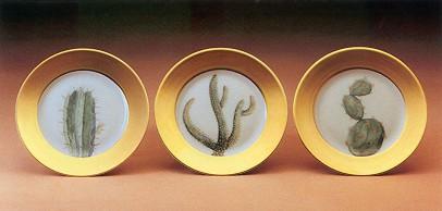 daum-cactus-dpb.jpg