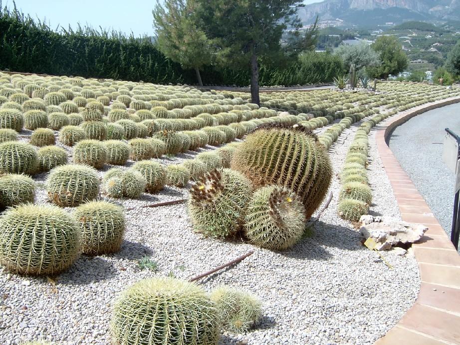 decenas%20de%20metros%20plantados%20de%20cactus...%7E0.jpg