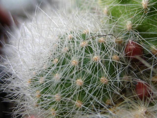 detallealbiflora.JPG