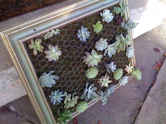 diy-framed-vertical-succulent-garden-2.jpg