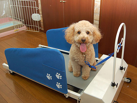 dog-treadmill.jpg