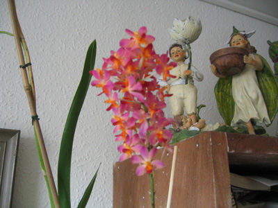 doricendrum1.jpg