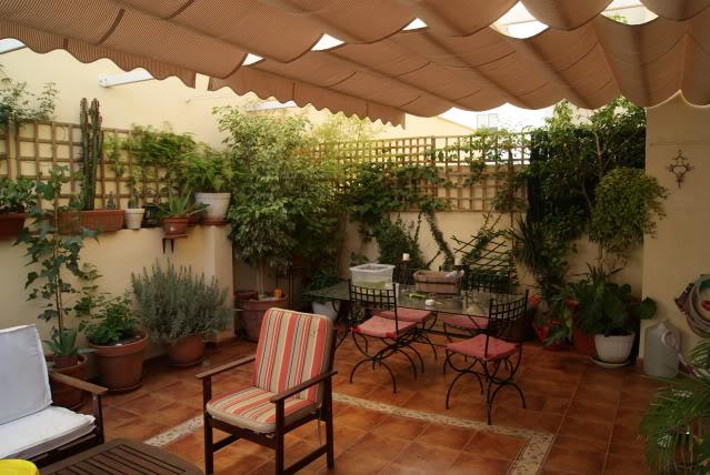 Fotos de mi miniestanque en la terraza for Terrazas traseras