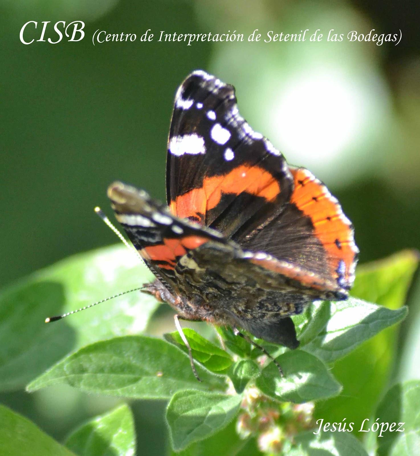 DSC_0540+copia.jpg