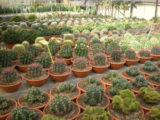 vivero de cactus y crasas en girona