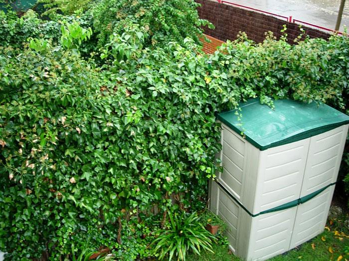 Software de dise o de jardines p gina 4 for Software diseno jardines