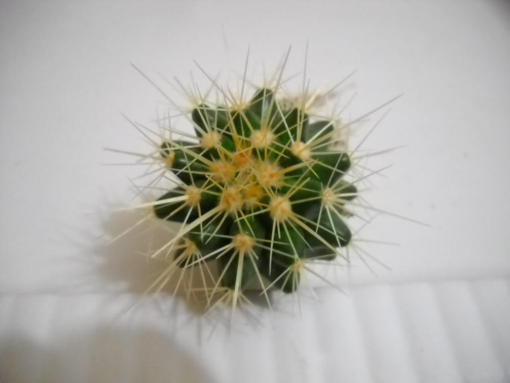 echinocactusgrusonii-1.jpg