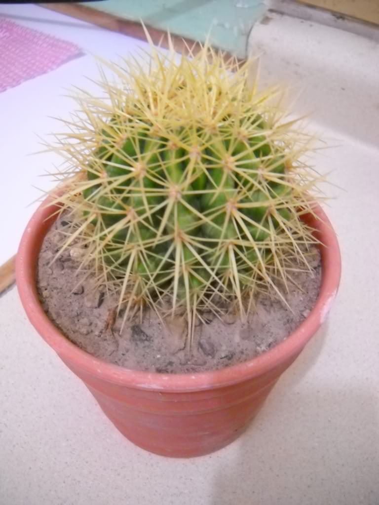 echinocactusgrusonii.jpg