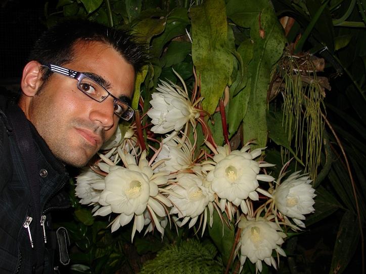 epiphyllum_oxypetalum.jpg